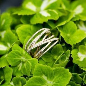 yellow gold crossover ring on green plant